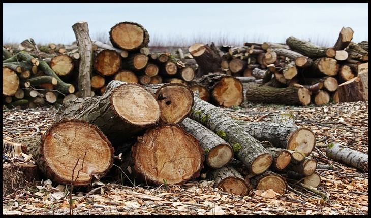 """Guvernul, acuzat de lipsă de reacție: """"Principalele reţele de crimă organizată din domeniul forestier au căpătat liber la defrişări ilegale"""""""