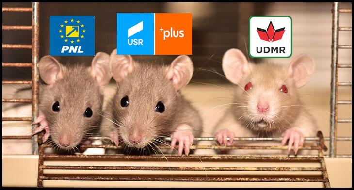 """Ziarul cu care se șterg la fund primarii galbeni din Sibiu este de acord cu prezența șobolanilor prin București: """"Femeia aceasta curajoasă trebuie susţinută! Ţara are nevoie de asemenea oameni"""""""