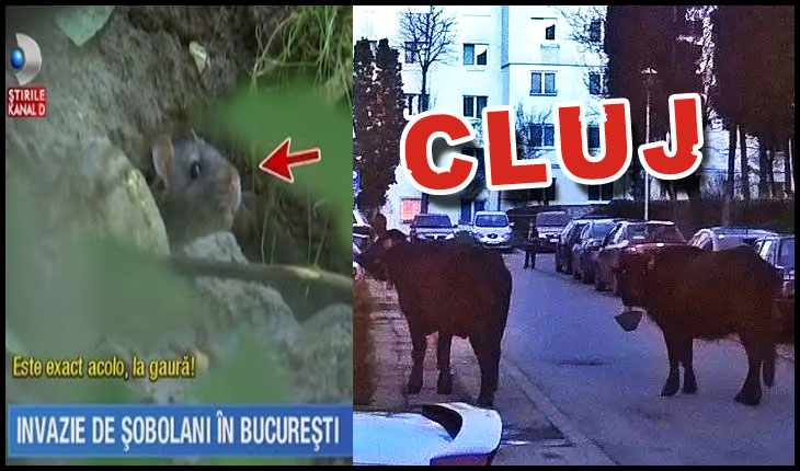 """O turistă impresionată de Iași: """"Bucureștiul e o cocină iar Clujul, un grajd"""", Foto: captura TV Kanal D"""