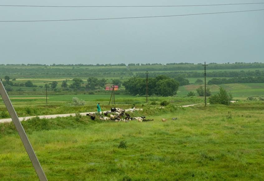 Cioban în câmp. Foto: ©FAO/Dorin Goian